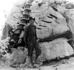 Man standing in from of fossils of backbones sticking out of a large rock.