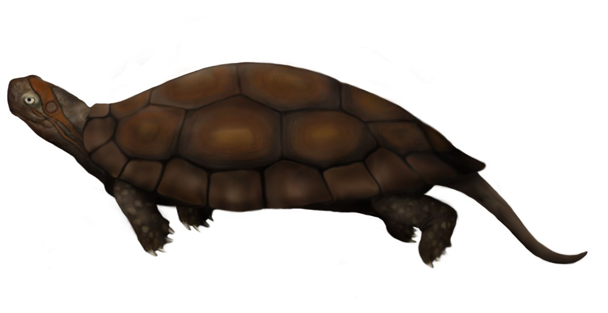 Artwork depicting a dinochelys which is similar to a turtle