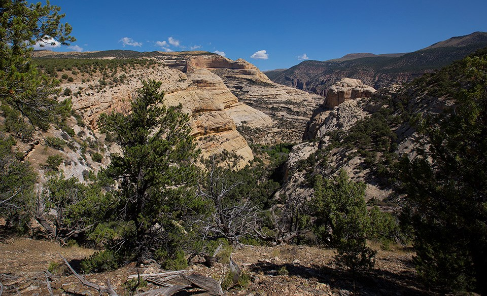 Rocky canyon rim dotted with trees