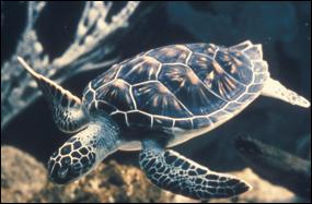 Sea Turtles And Light Everglades National Park U S