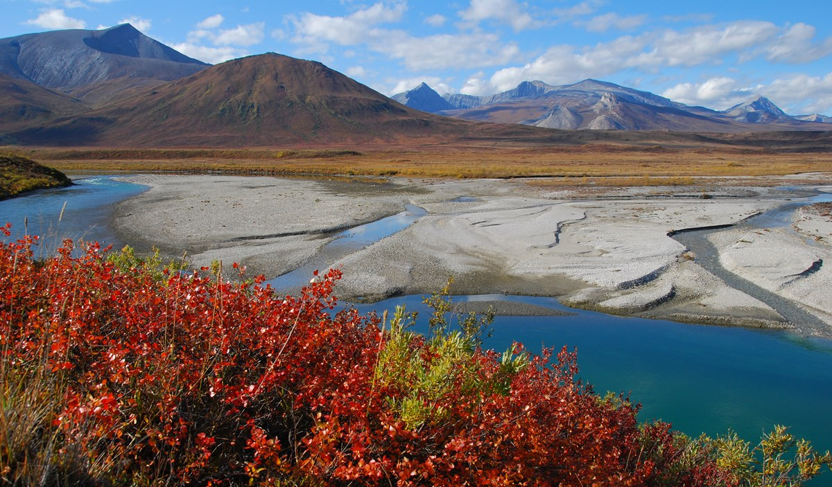 Noatak River flowing through mountains. Red leaves in foreground.