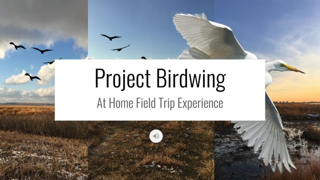 Project Birdwing Virtual Experience