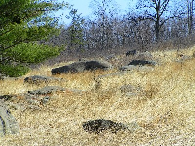Grasses on Little Round Top