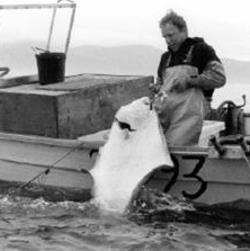 Commercial fishing for halibut in a skiff