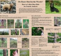 bear shedding poster