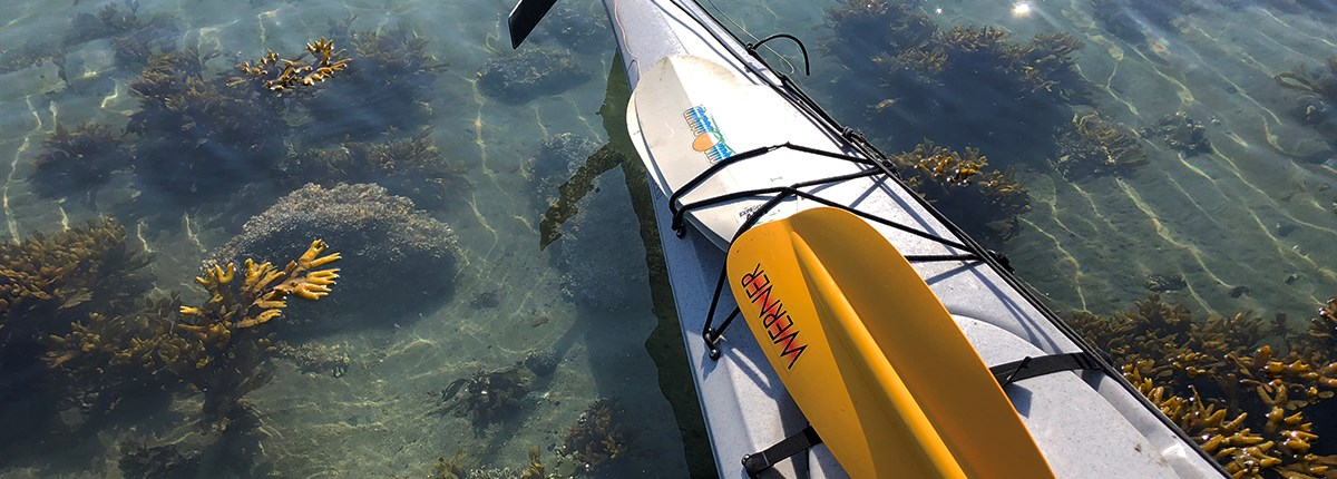 the stern of a white kayak sits in shallow water on a Glacier Bay beach, with seaweed visible beneath the tide