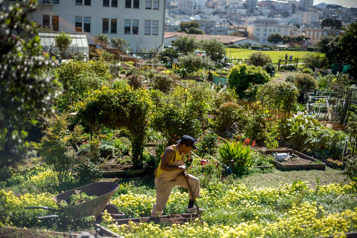 Man works in community garden at Fort Mason.