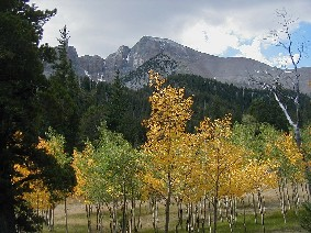 Aspens in fall color below Wheeler Peak