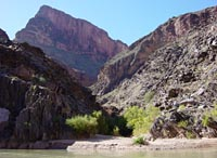 Plants growing in a side canyon along the Colorado River.