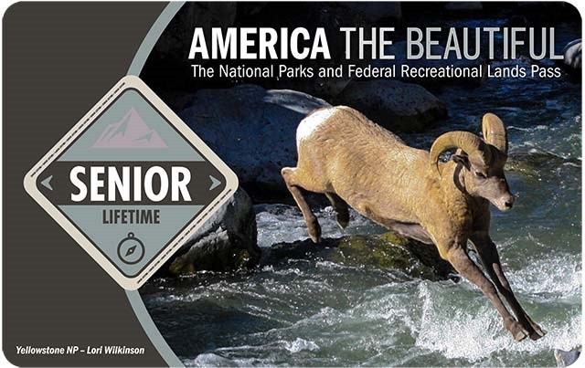 "America the Beautiful Lifetime Senior Pass shows a bighorn ram leaping over a fast-running stream, the words ""senior lifetime"" are in a light grey diamond on the left."