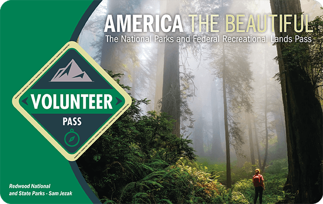 "America the Beautiful 2021 Annual Volunteer Pass shows a hiker silhouetted by a towering misty forest, the word ""volunteer"" is in a green diamond on the left."