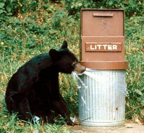 a bear cub bites the plastic trash can liner on a bear-proof garbage can
