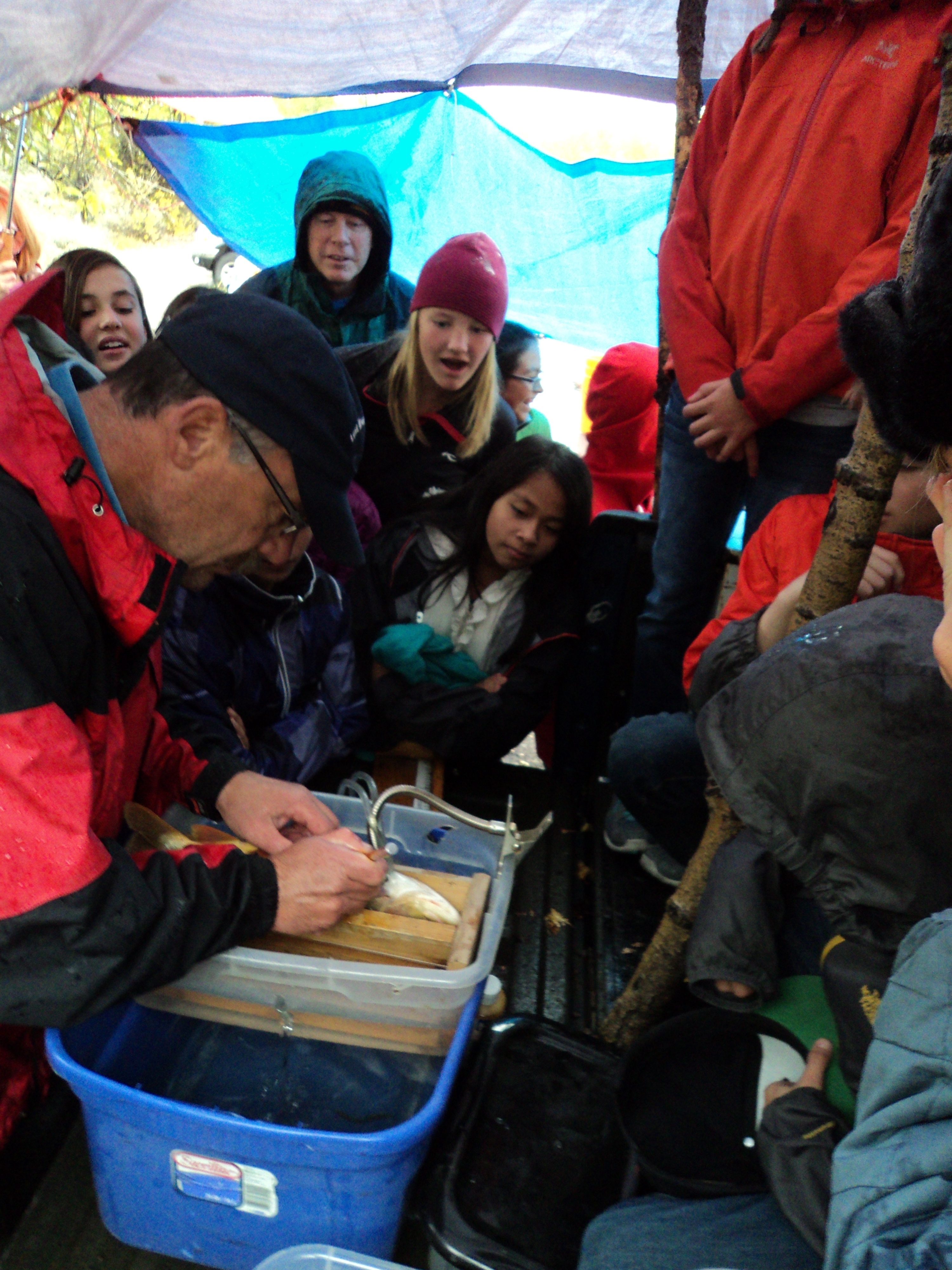 Students look on with amazement as a biologist implants a radio tracking device into a captured trout.
