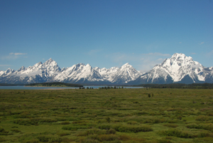 Willow Flats and the Teton Range from Jackson Lake Lodge