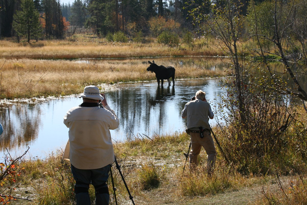 Photographers watch a moose in a pond.