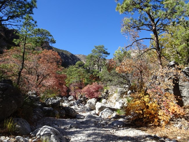 A Fall Colors Update of Devils Hall on November 6th, 2020. Fall colors are fading within the wash.