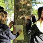 Kids making tree rubbings