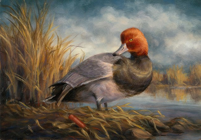 artwork for Idaho Junior Duck stamp 2016, reddish headed duck at water's edge with cattail and grasses painted by child