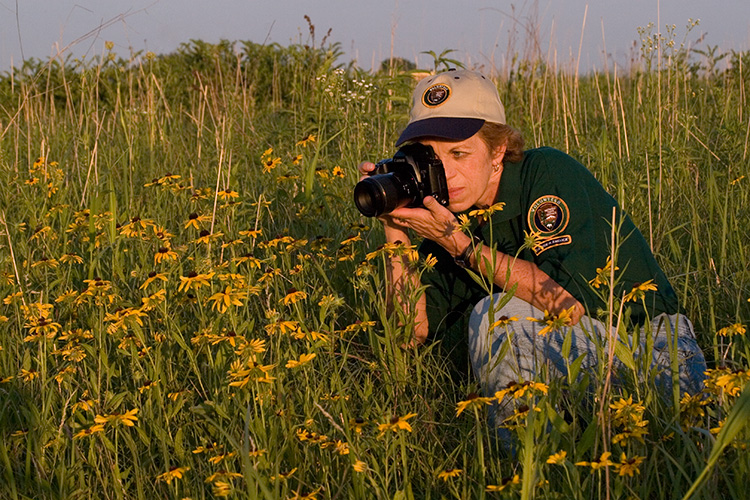 A woman photographs yellow flowers in the prairie.