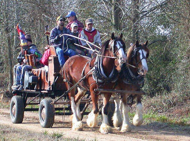 Mardi Gras in Cajun country with horse-drawn wagon 688 wide
