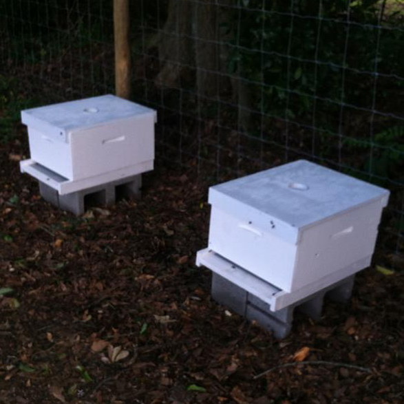 Beehives at the Boyhood Farm