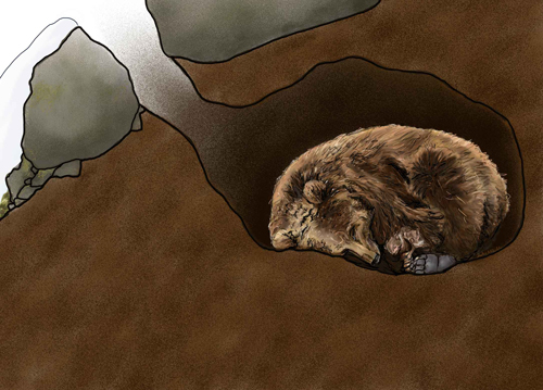 Illustration of a brown bear in a den