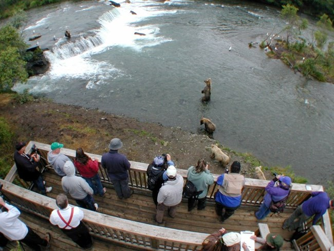 people standing on a wood structure over a river full of bears