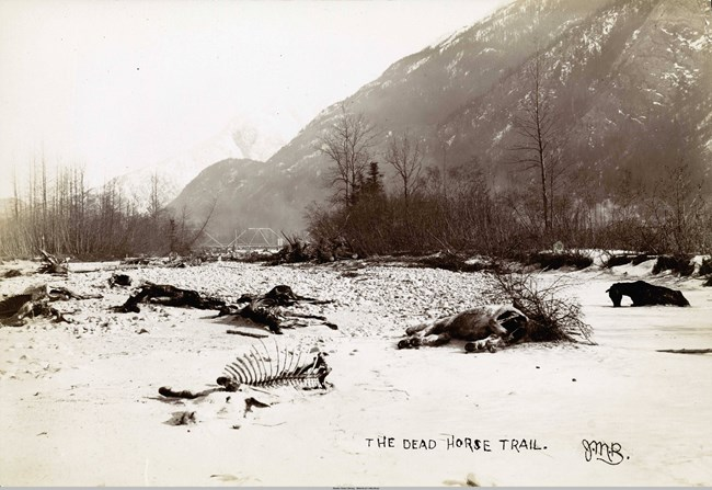 skeletons of dead horses in a river bed