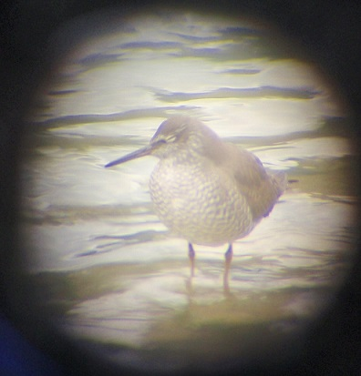 Wandering Tattler through the Natural Resources team's spotting scope.