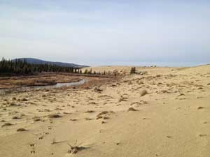 Creek bordering Kobuk Sand Dunes
