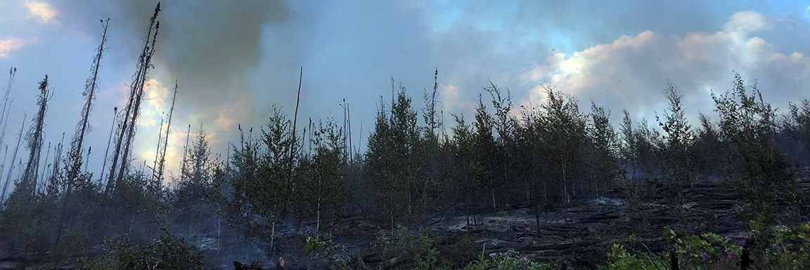 Tree line smolders from active fire in Dome Creek July 2018.