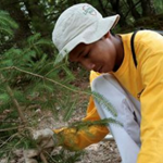 A young man in a yellow shirt working outside to plant a tree in the woods.