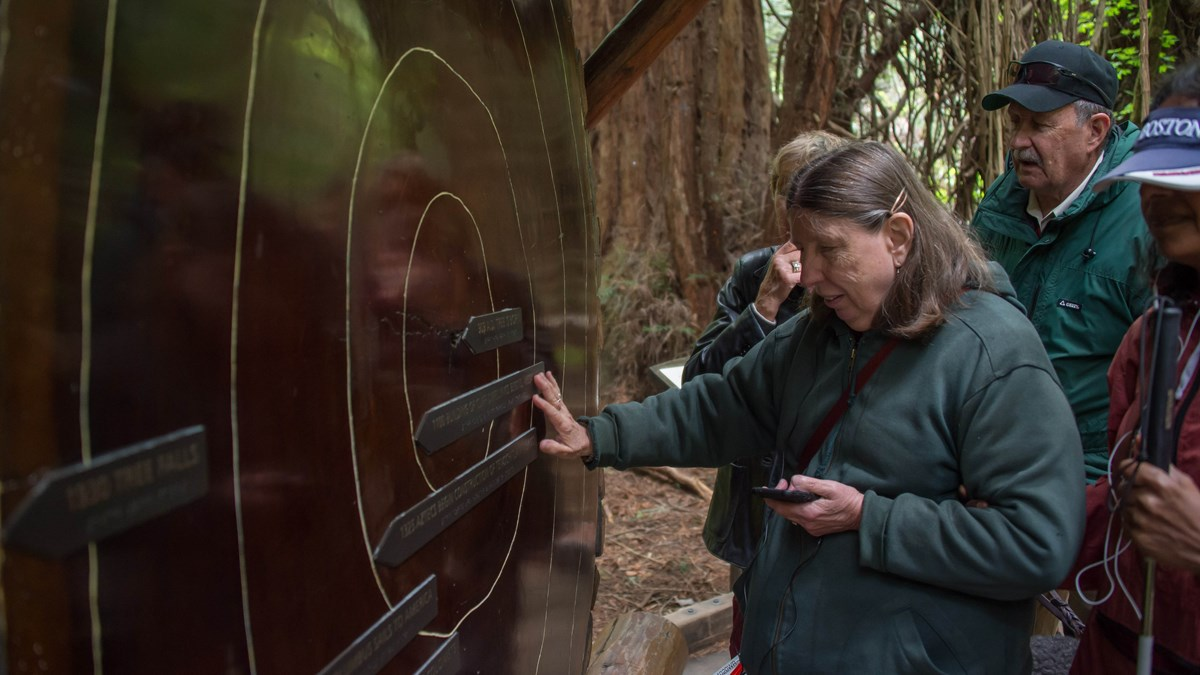 Visitor touching braille icons on a redwood tree cutting.