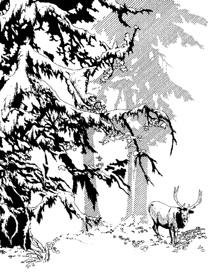 A drawing of a bull elk with antlers and large evergreen trees.