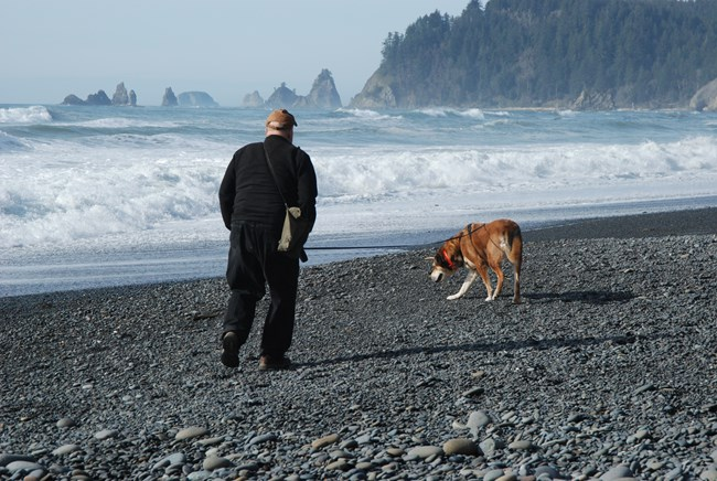 Visitor walking leashed dog on beach
