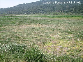 Manure Disposal Pasture after being mowed in 2008.