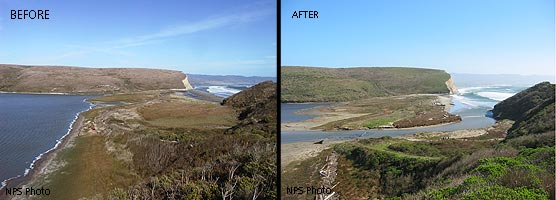 Horseshoe Pond before and after restoration