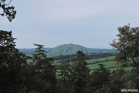 A grass-covered hill is visible in the distance, framed by trees in the foreground.