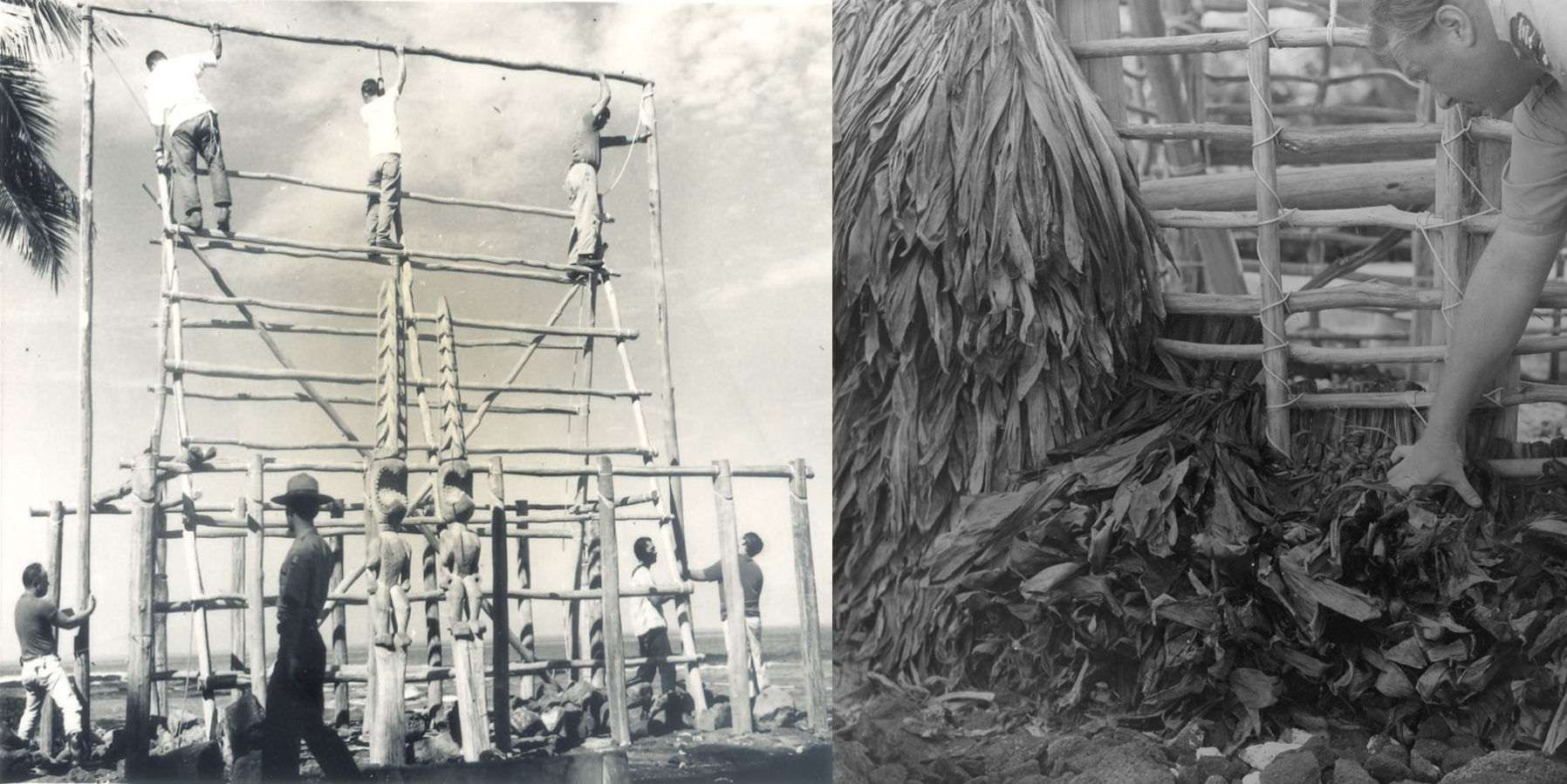 Two photos: 1) Workers lash frame of Hale o Keawe 2) Worker uses ti leaves to thatch the walls of Hale o Keawe