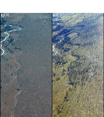 aerial photos from 1976 and 2005 show tree growth along a river