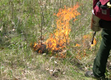 A small fire burns in the grass, lit by a small tank that drips ignited fuel carried by a firefighter.