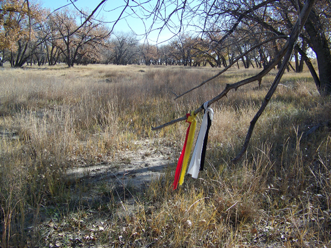 Cottonwood stand at Sand Creek Massacre NHS. Strips of colored cloth placed by tribal members are tied a the tree branch in the foreground.
