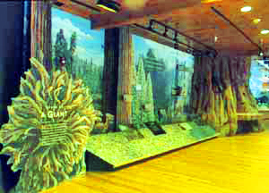 New exhibits in the Museum illustrate the natural and human history of Giant Forest.