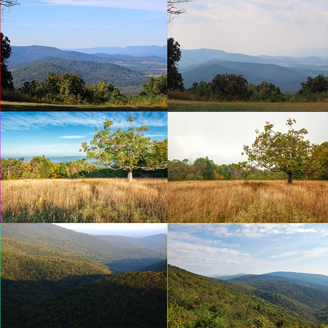 Grid of 6 photos showing the progression of fall