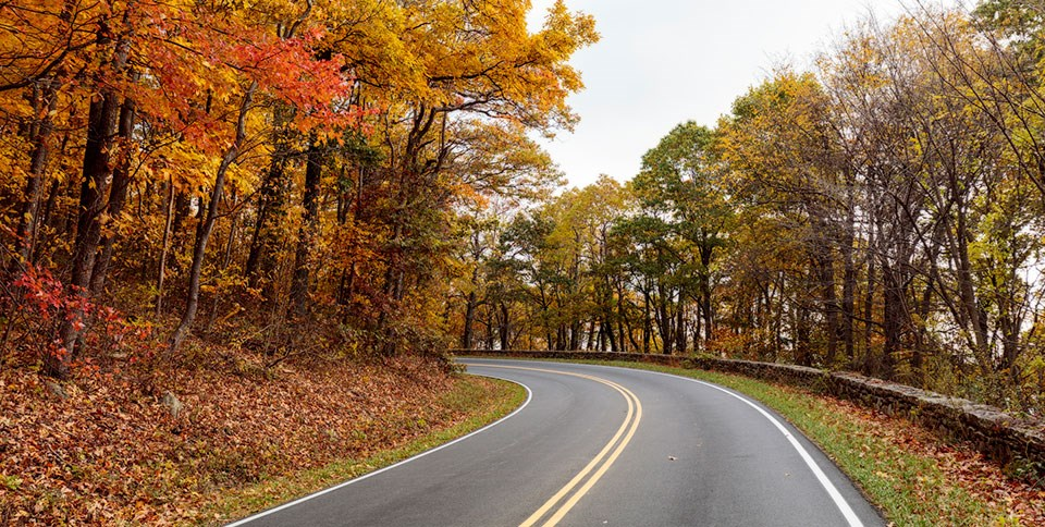 A curve on Skyline Drive with yellow and orange Fall foliage.