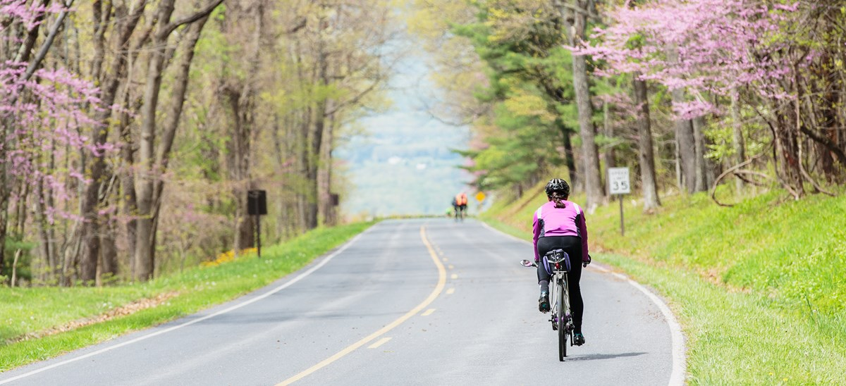 A cyclist riding down an empty road surrounded by flowering trees.