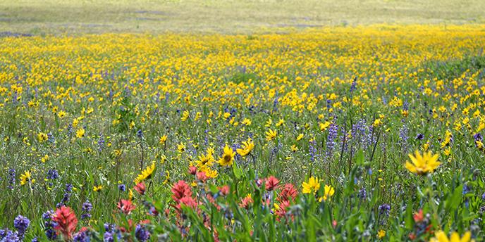Image result for Springtime hillside flower pictures