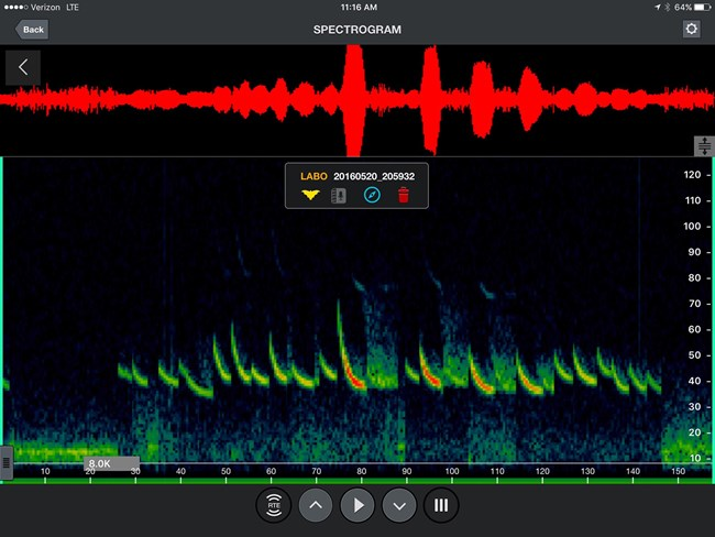 spectrogram of Eastern red bat call