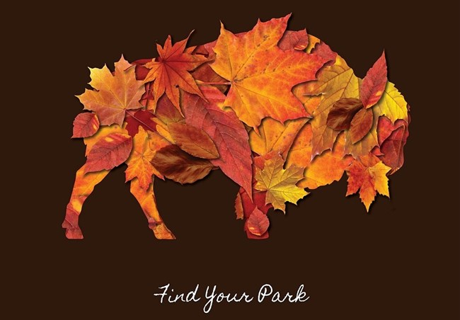 "Illustration of a bison made of tree leaves with text reading ""Find Your Park"""