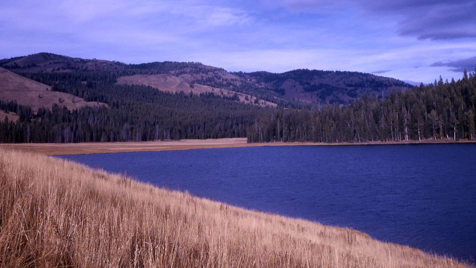 Yellow grassy fields and tall conifer pine trees surround the blue waters of Cascade Lake